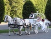 Loon Meadow Farm's Horse & Carriage