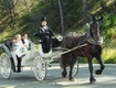 Noland's Horse-Drawn Carriages