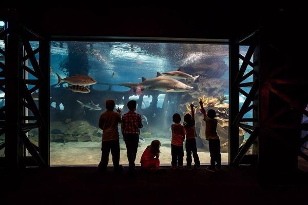 Greater Cleveland Aquarium Corporate Events Private